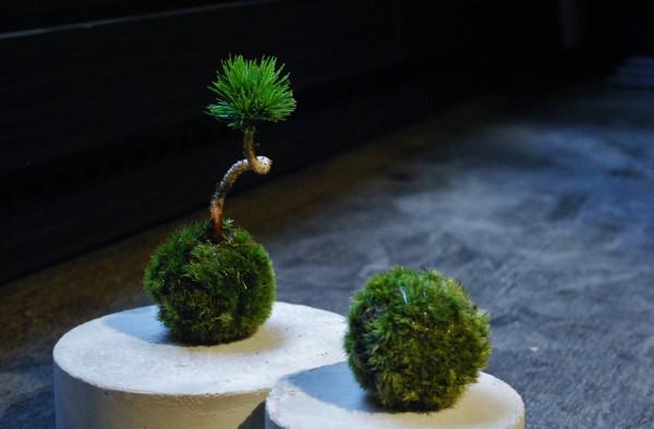 苔玉・盆栽のワークショップ/saku.Botanicalworks