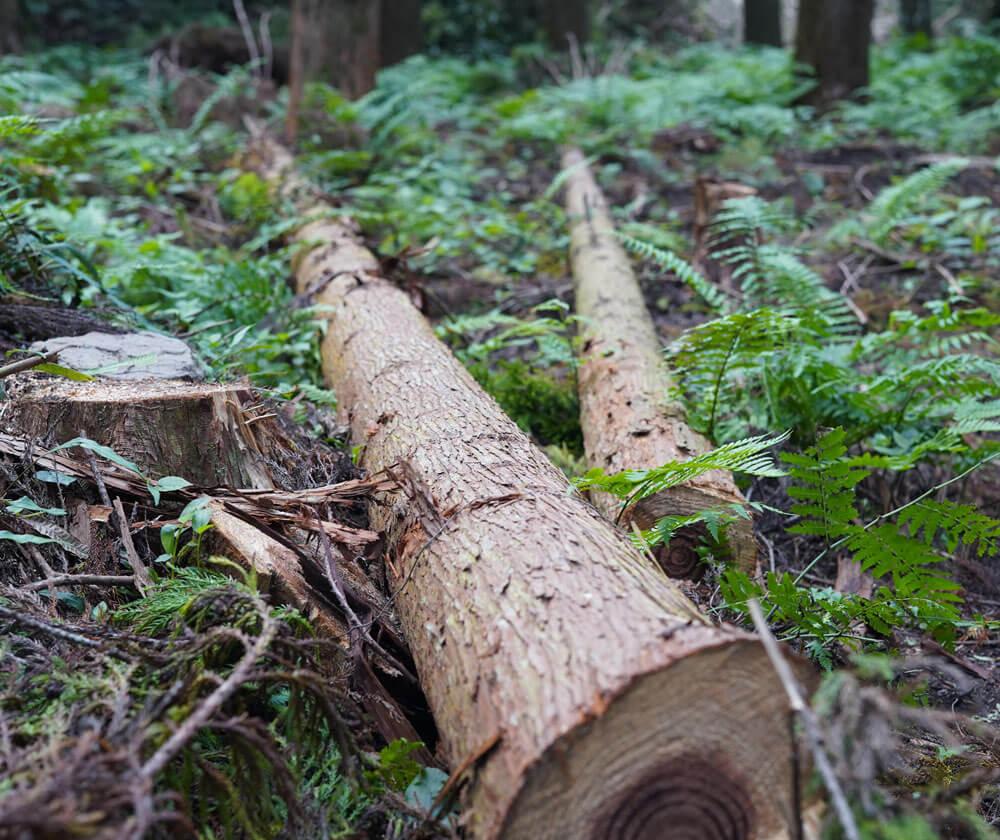森の座談会